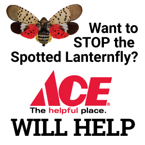 Stop the Spotted Lanternfly